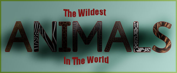 the wildest animal in the world