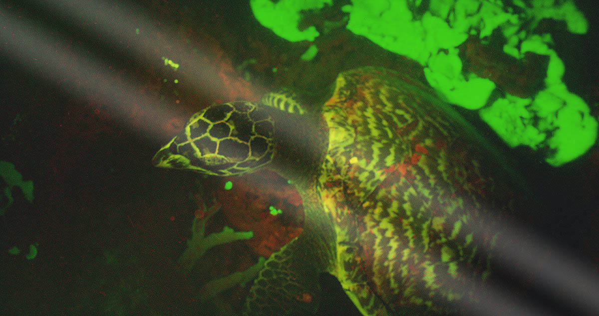 glowing sea turtle