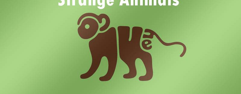 strange animals around the world