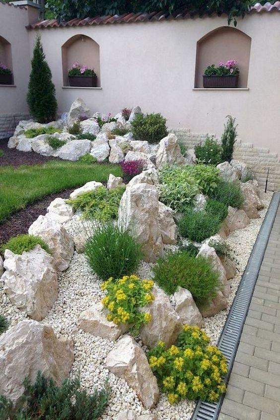 rockery plant